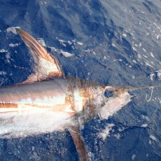Swordfish-billfish foundation