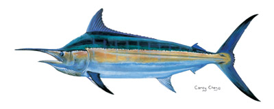 Black Marlin_Carey Chen