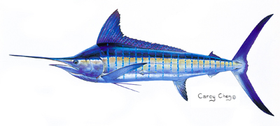 Striped Marlin_Carey Chen