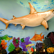 Shark Mural done by South Broward High School