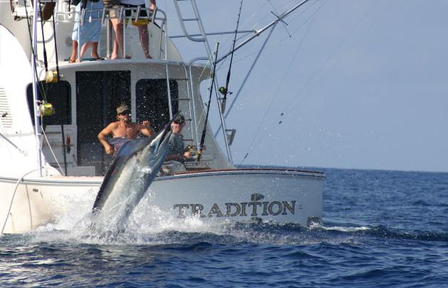 Tradition Charters_Billfish