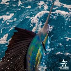 Swordfishing sportfishing_isla_qualifier_The billfish foundation