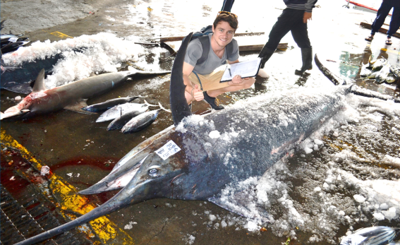 sam williams 284kg black marlin