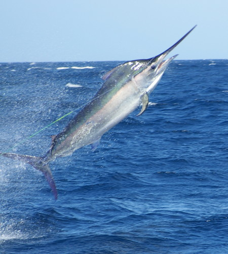 close marlin